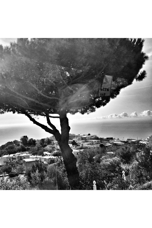 treethruwindow.jpg