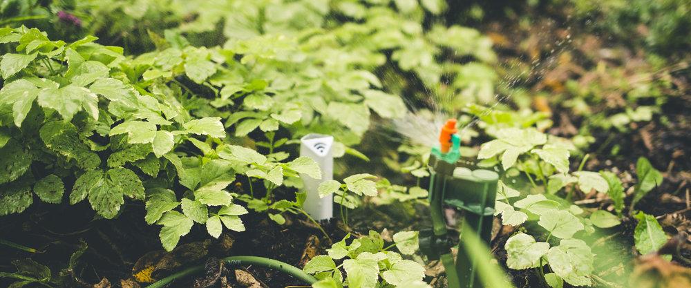 plantlink_plant-sensor_fall_3.jpg