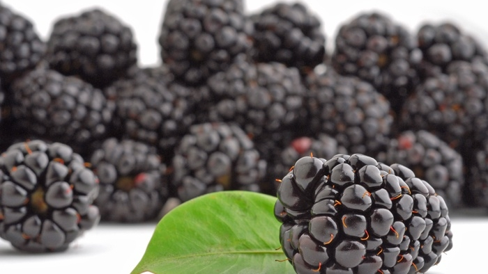 Organic Blackberries -