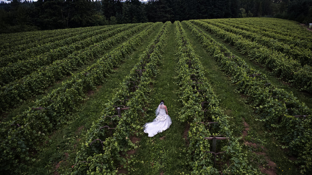 Wedding in the vineyards of Willamette Farms