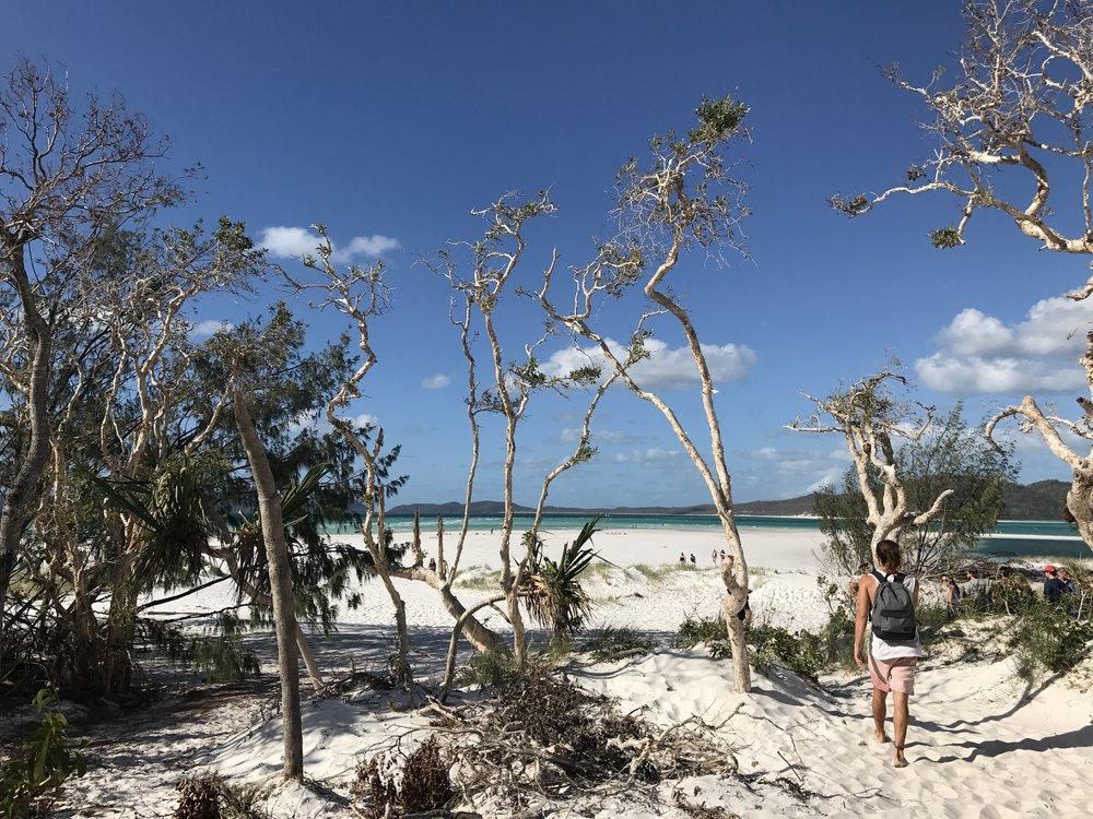 Bushwalking to Whitehaven Beach