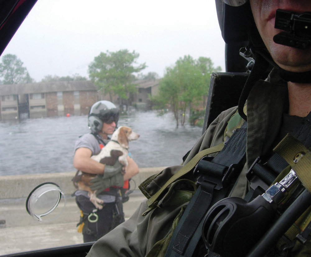 920 rescue pup.JPG