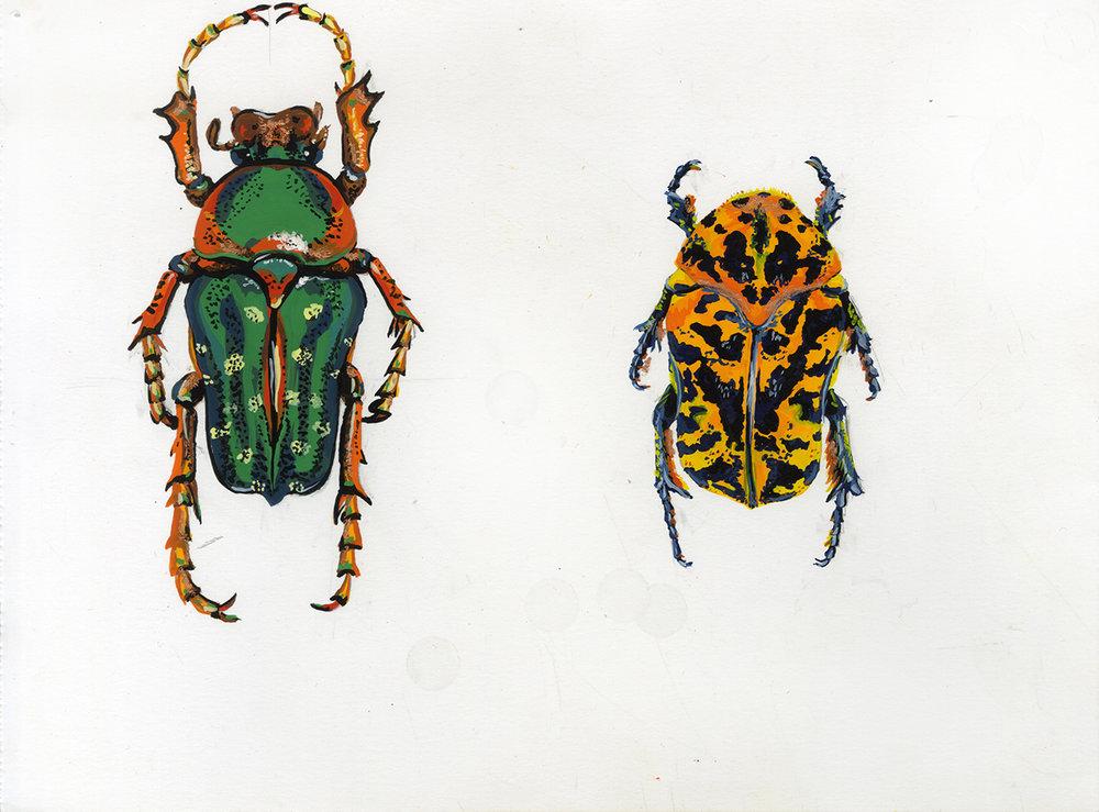 beetle_bugsA_002.jpg