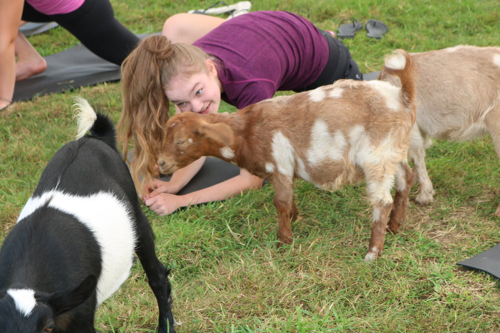 Gift Certificates  - Want to make someone incredibly happy? Give them the gift of goat yoga! Certificates available here.