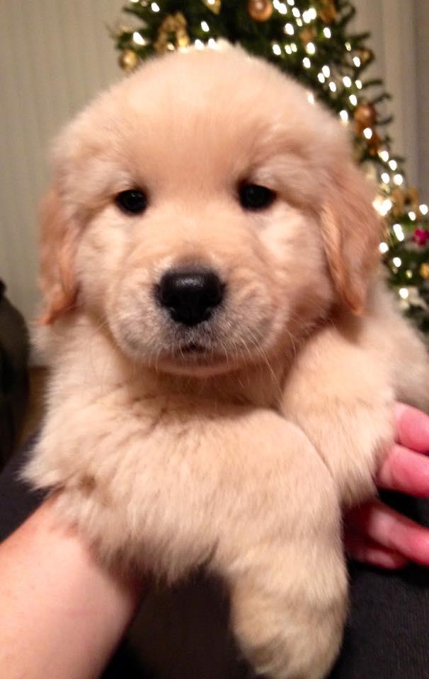 puppy9.jpg