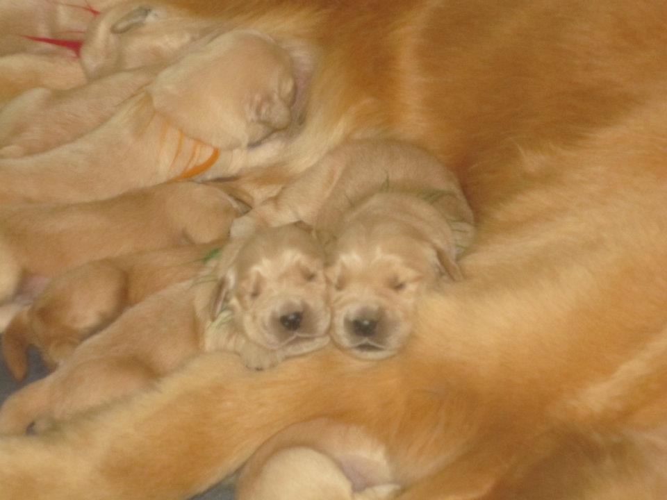 puppy20.jpg