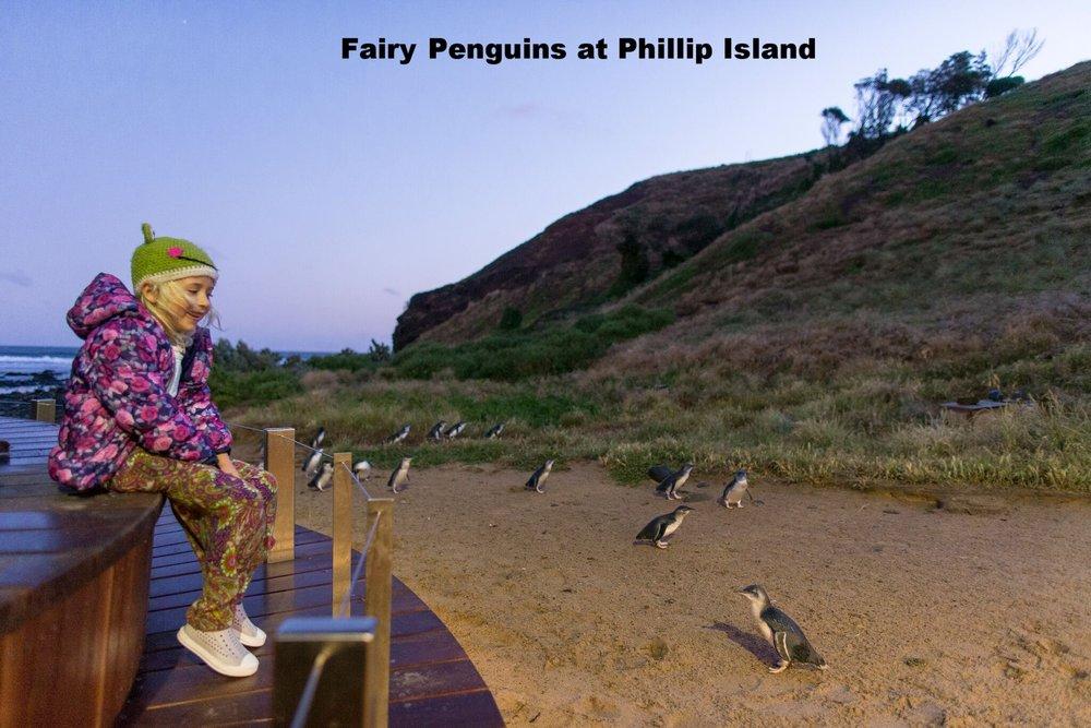 Penguins Plus Viewing.jpg