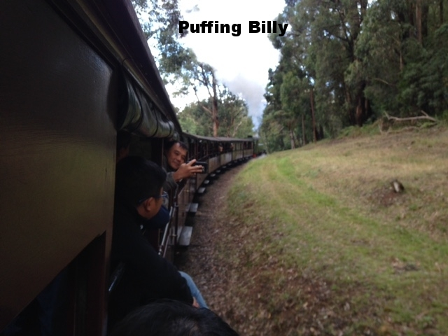 PUFFING BILLY IN THE BLUE DANDENONGS