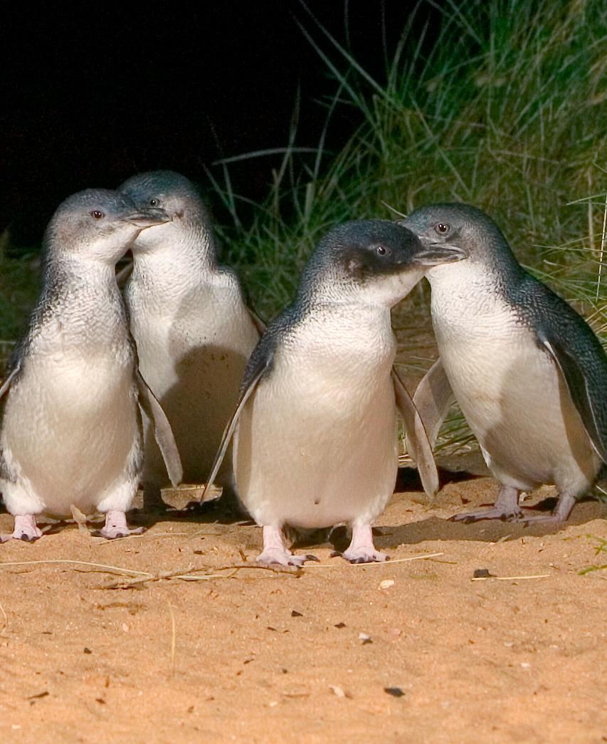 penguins.jpeg