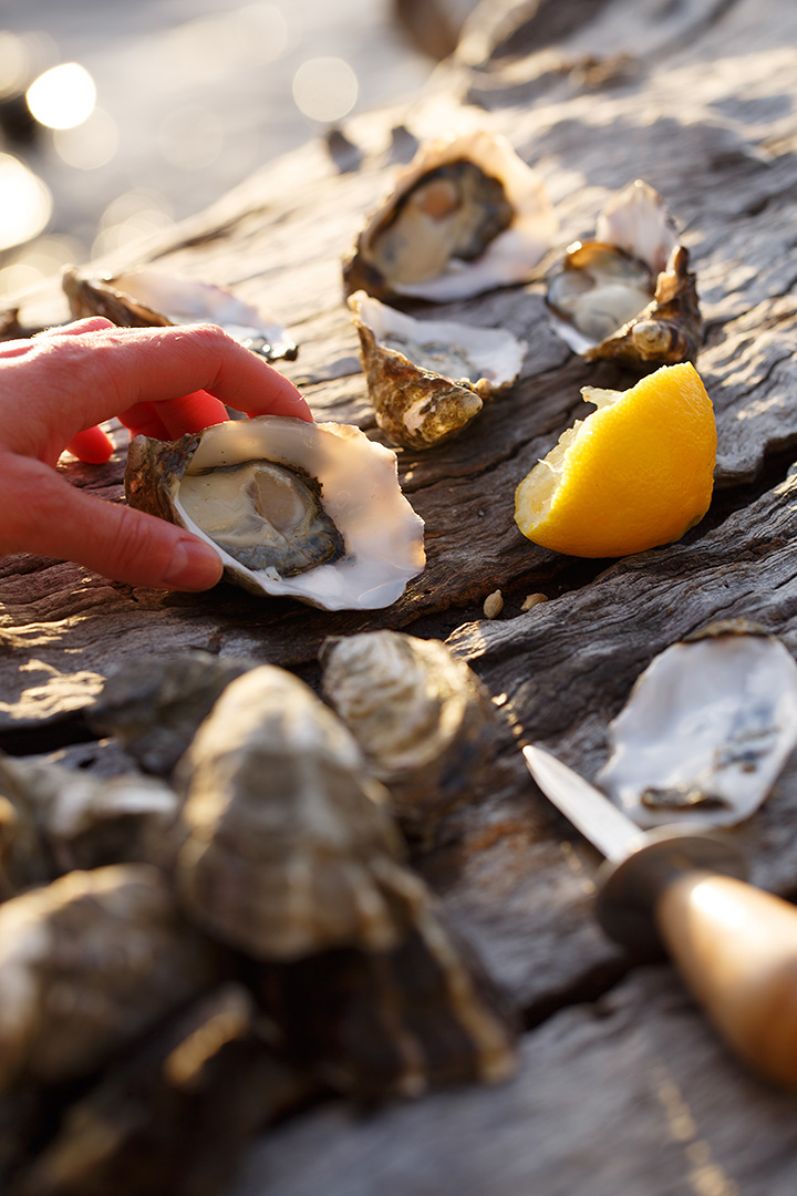 shucked_oysters