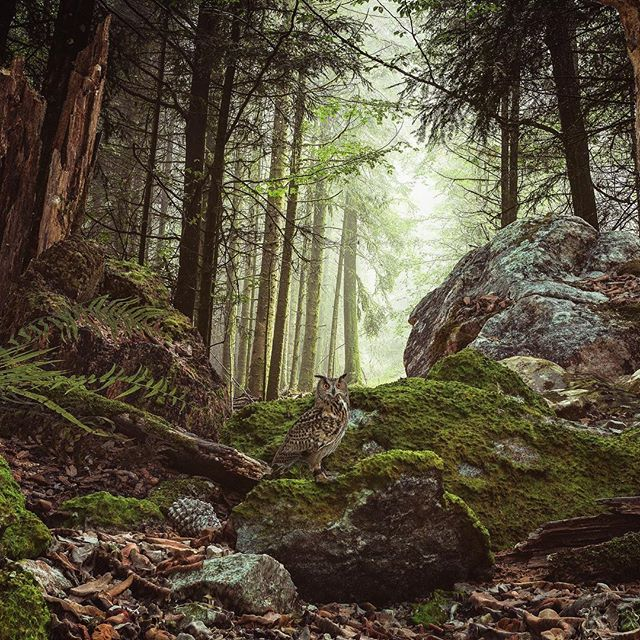 My forest composition render with Vray, used megascan assets from Quixel and hdr lightning www.sciontidesign.com #forest #composition #megascans #quixel #vray #mood #3d #render #render_contest #landscape #realism #3dsmax #trees #rocks #owl #visualization #hdr @quixelofficial @chaosgroup