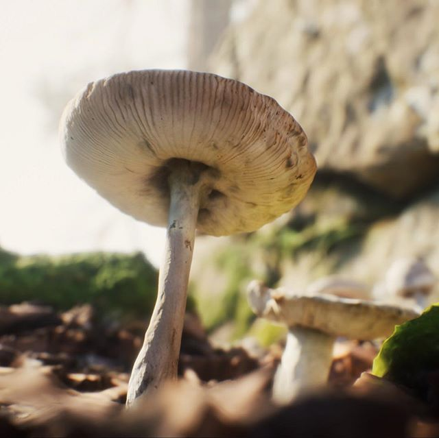 My forest scene render in Unreal Engine 4 used Quixel Megascan assets www.sciontidesign.com #ue4 #unrealengine #forest #mushrooms #render #realtime #quixel #visualization #environment #3d #animation #realism #render_contest #archviz #trees @quixelofficial @unrealengine