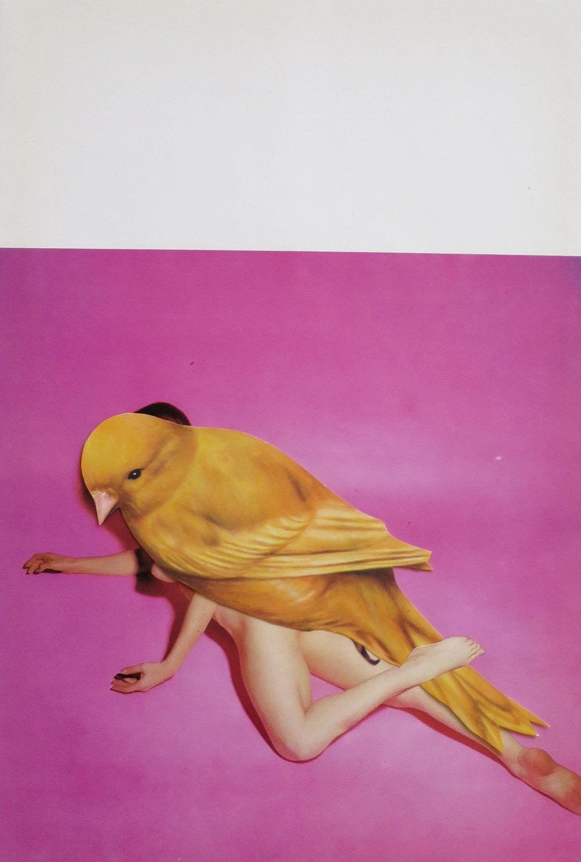 pinkbird.jpg