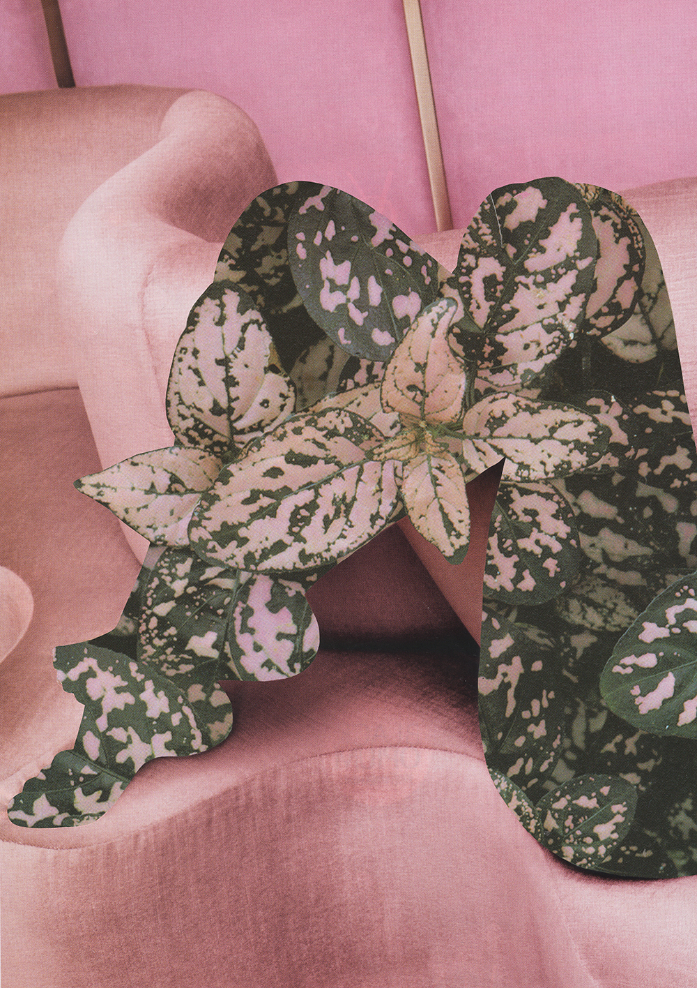 pinklegs.jpg