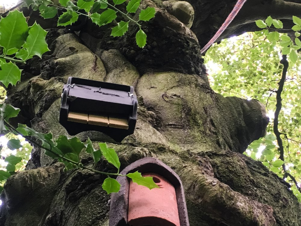 schwegler 1ff bat box in tree