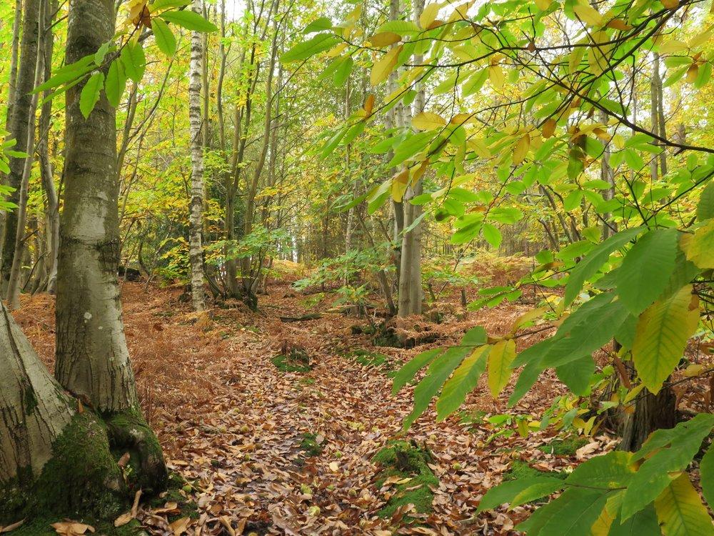 woodland badger habitat