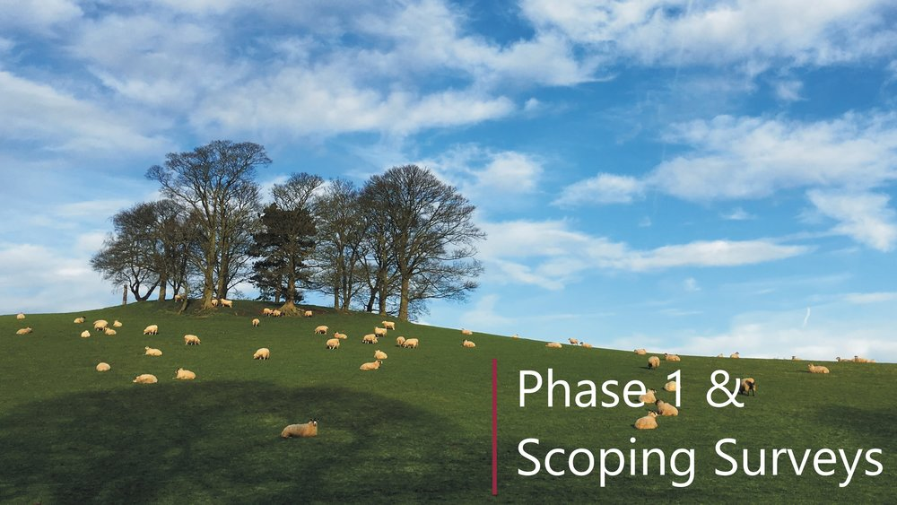 Phase 1 habitat assessment and Preliminary Protected Species Scoping Survey in Lincolnshire