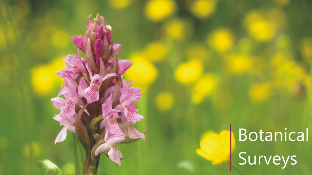 Botanical NVC survey, specialist orchid count in Cambridgeshire