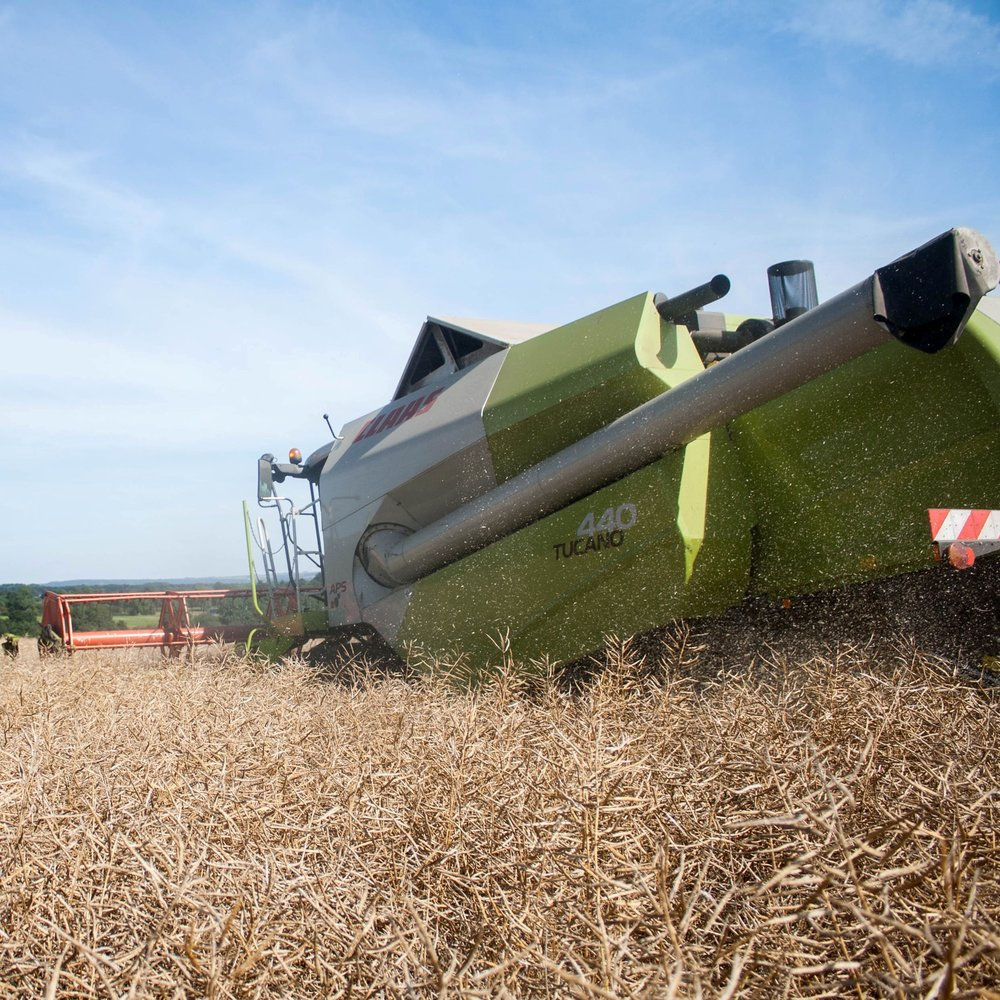 harvesting oil seed rape crop