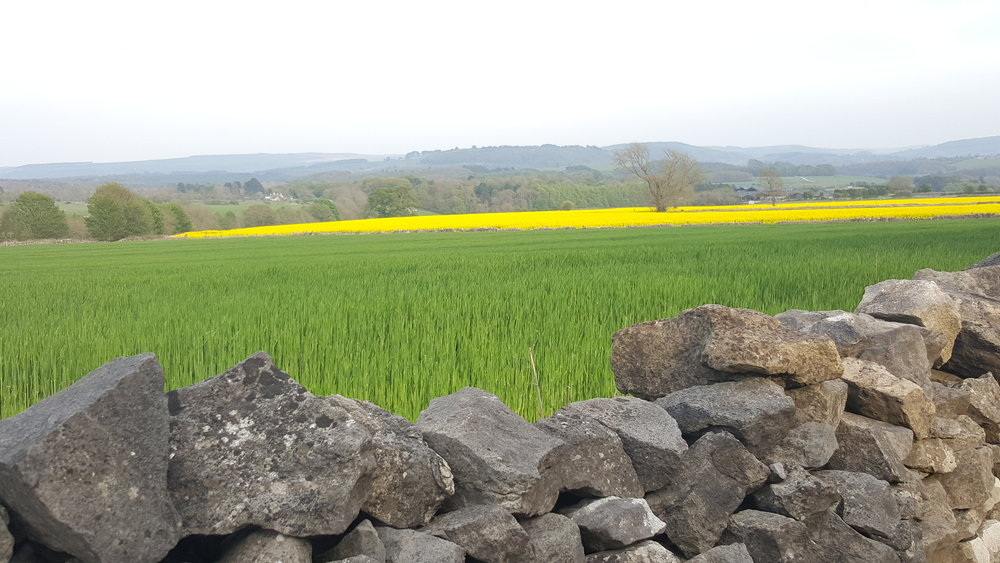 Derbyshire rapeseed oil