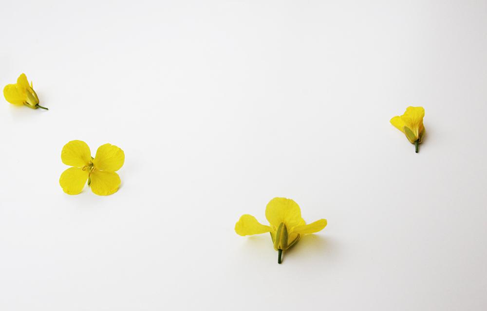flower2_small.jpg