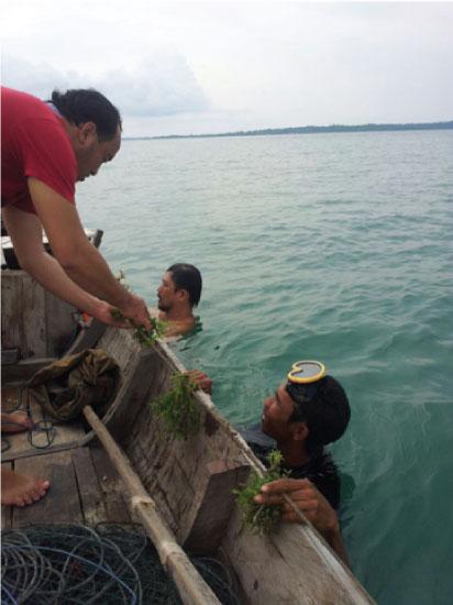 SEAWEED FARMING TRIAL