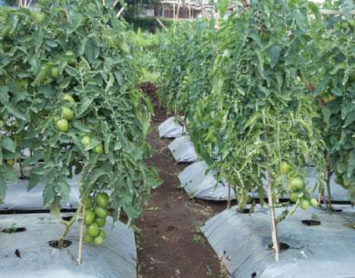 CROP FAMING TRIALS