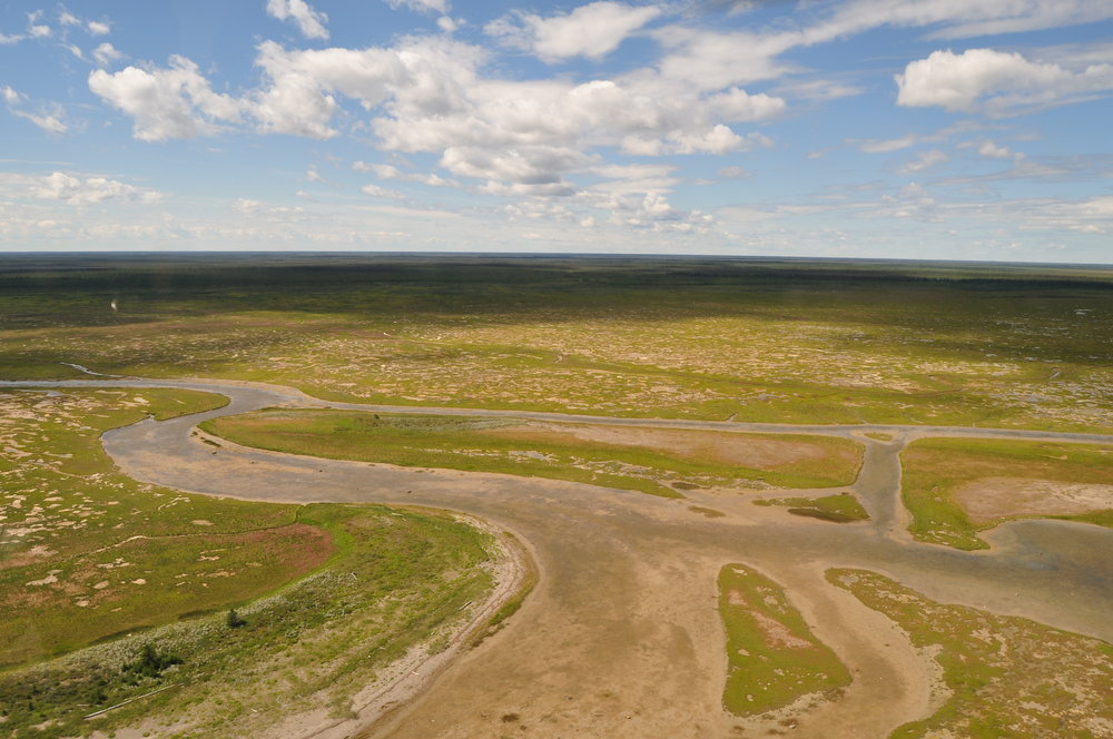 James Bay flats north of the Albany River. Photo: C. Friis
