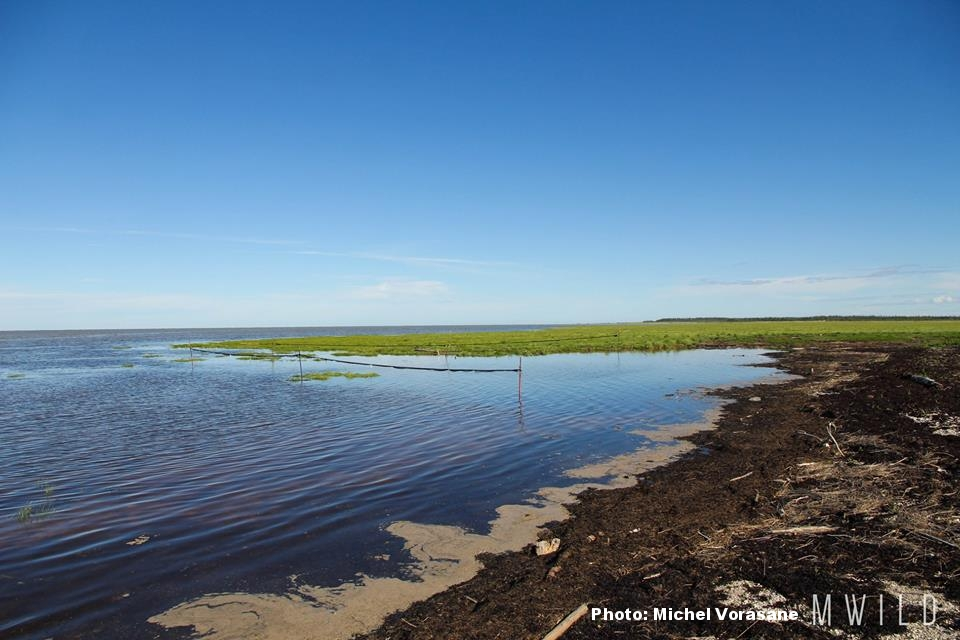 Flooded banding site at Longridge Point. Photo courtesy of Michel Vorasane