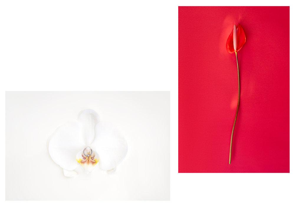 flowers-miahaggi.jpg