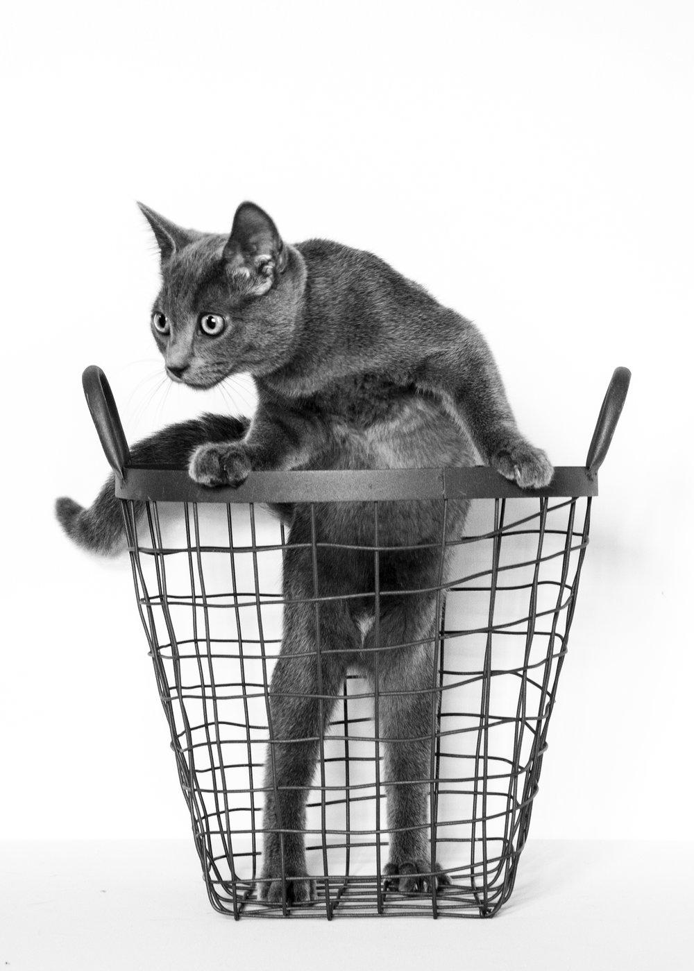 cat2bw.jpg