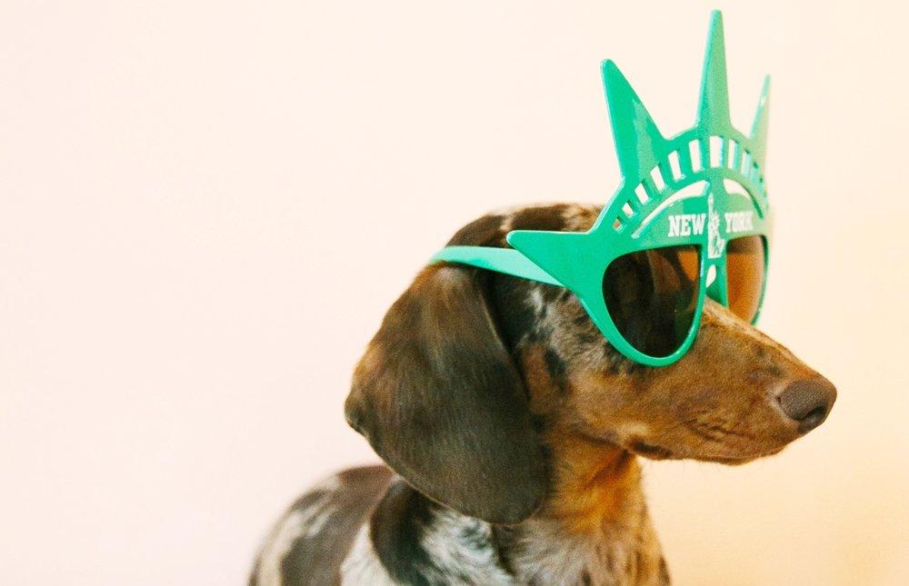 newyorkdog.jpg