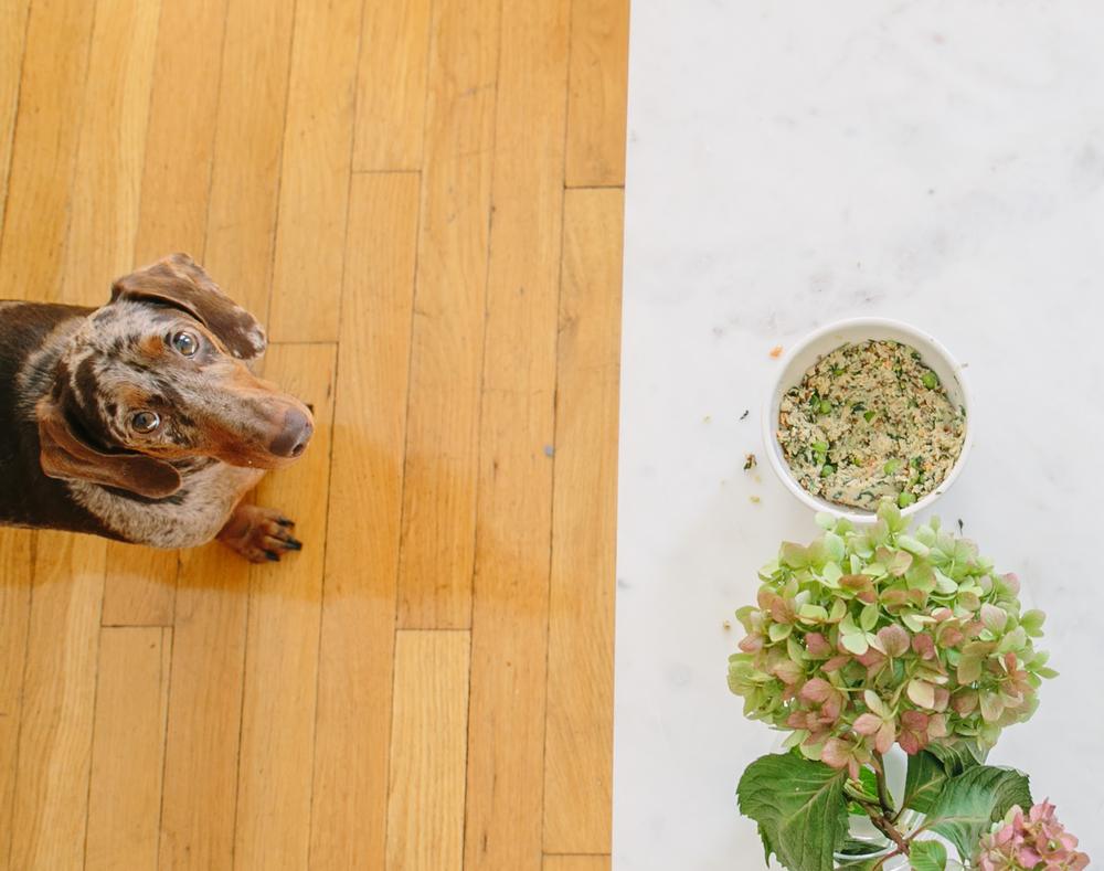 Spot & Tango Dog Food