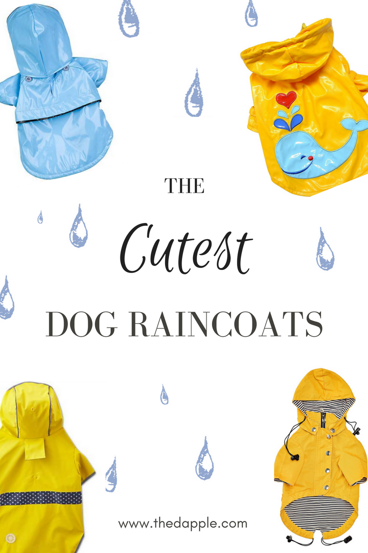 Rover Raincoat Roundup