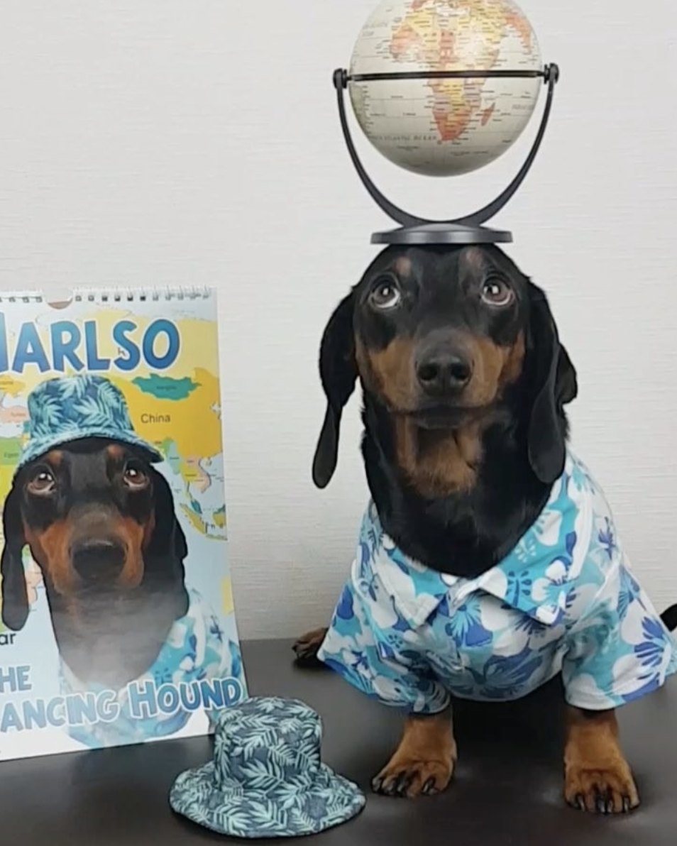 Harlso's new calendar. Photo courtesy of Harlso the Balancing Hound.