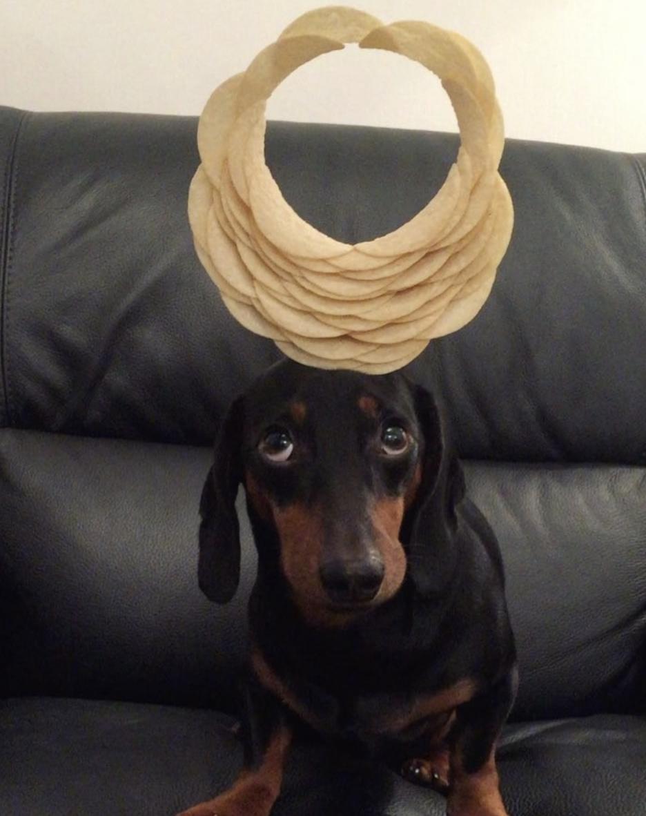 Photo Courtesy of Harlso the Balancing Hound