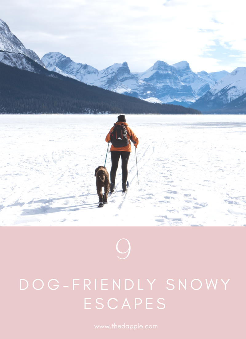 Dog Friendly Ski Resorts