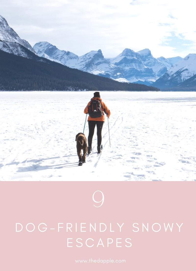 9 dog-friendly snowy escapes