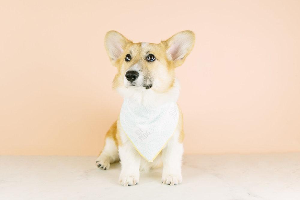 Lizzie models a Bumble & Hound bandana.