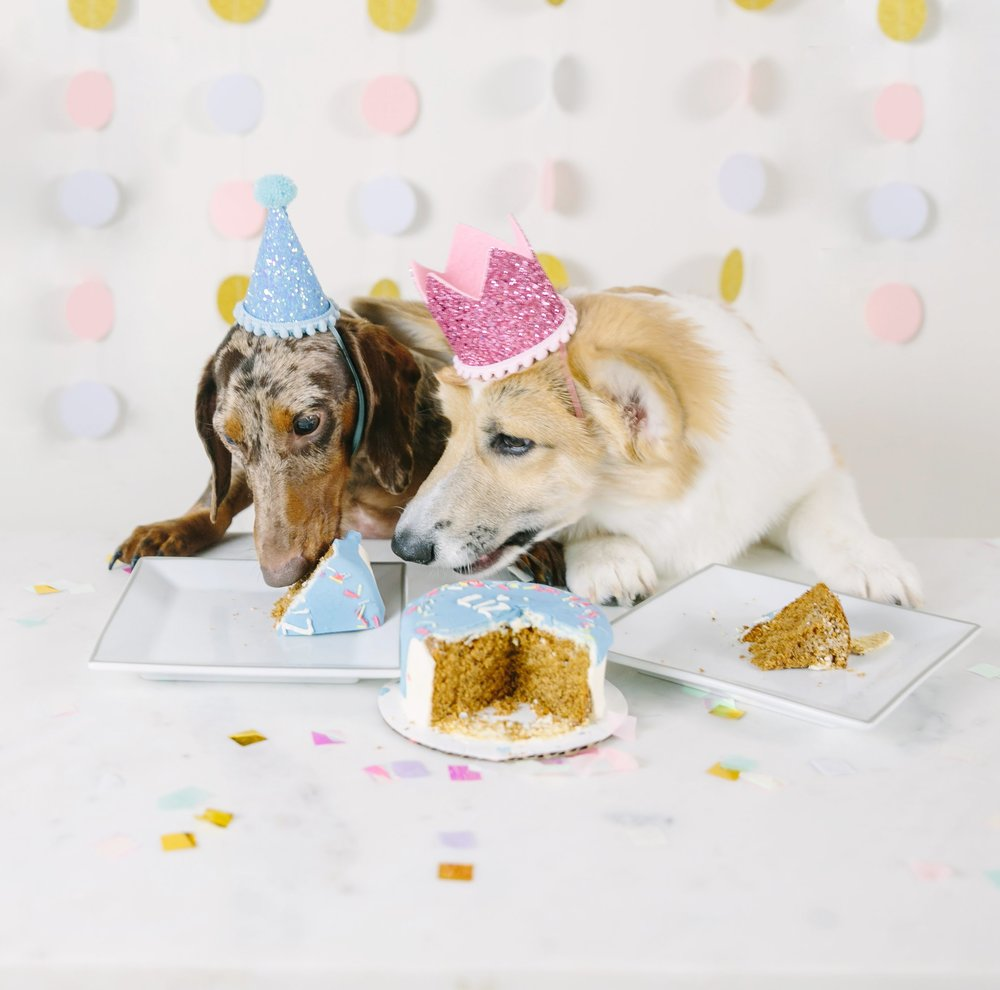 puppy half birthday party with dog birthday cake and dog party hats