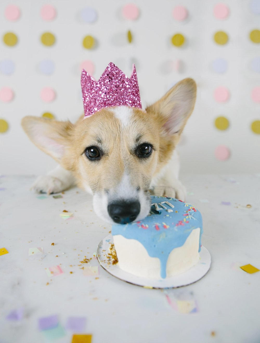 Puppy Half Birthday Party With Dog Cake And Hats
