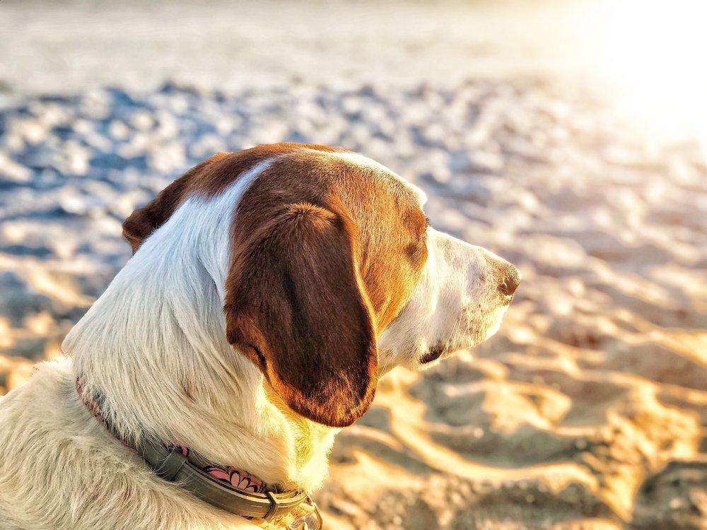 new jersey dog friendly beaches