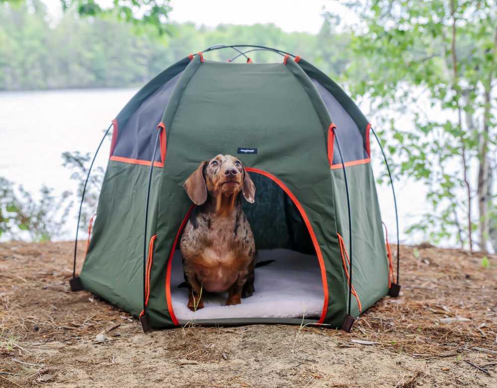 Dave just wanted to sit in his WagWear tent all day