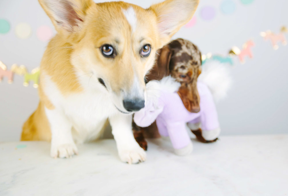 corgi fluff and tuff toy unicorn