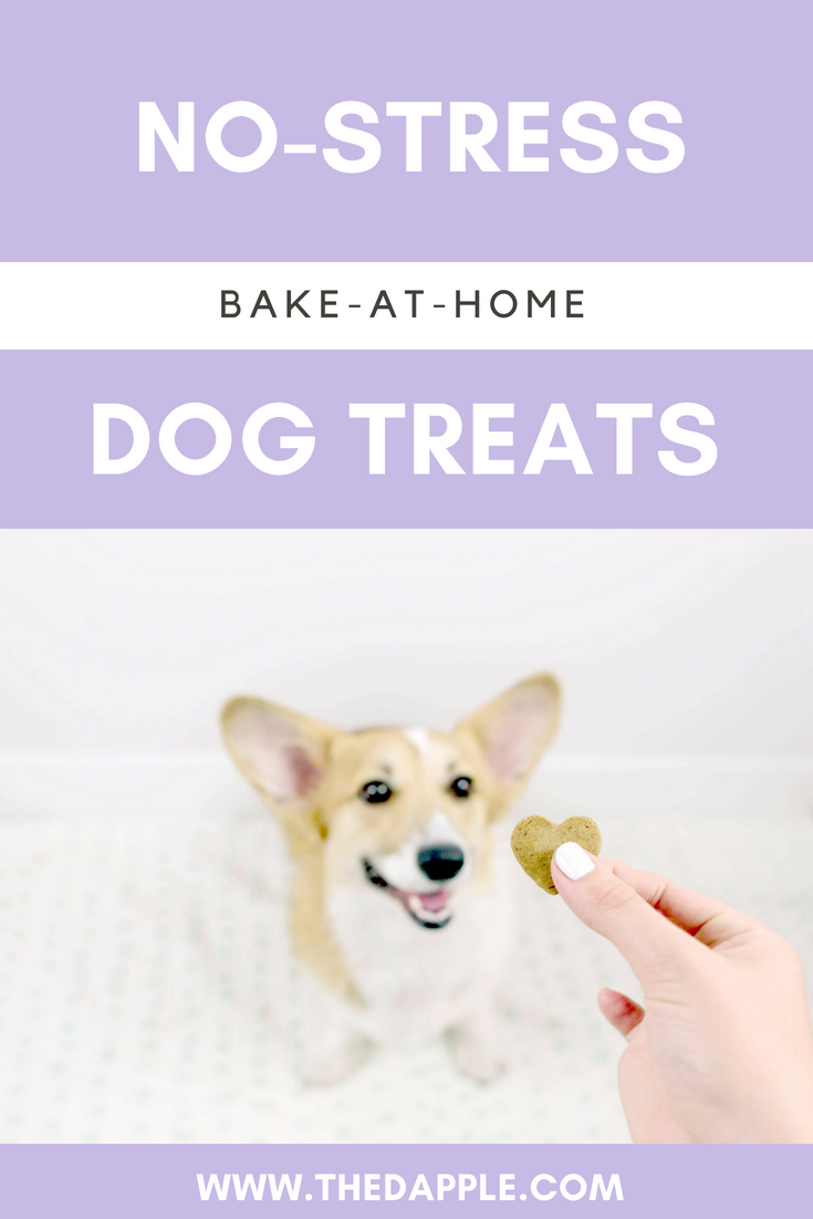 Try This Easy DIY Dog Treat Recipe