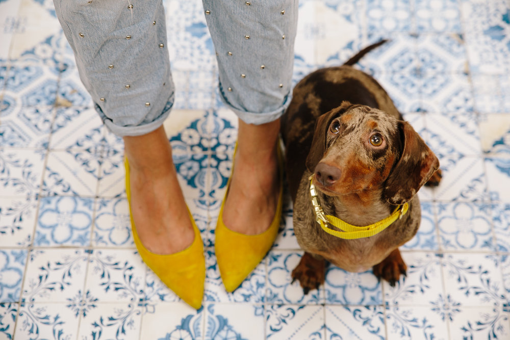 Ready for some weekend twinning! 💛 Collar from  Bonjour Fido . (Also,  shoes here  and  jeans here .)