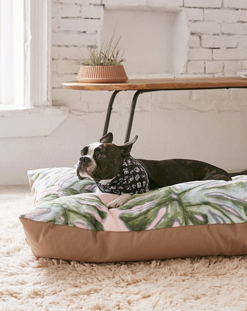 Palm Print Dog Bed on The Dapple Lifestyle Blog for Dog Lovers