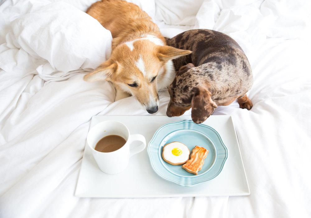 Spotted Dog Bakery Dog Treats on Dog Lifestyle Blog, The Dapple