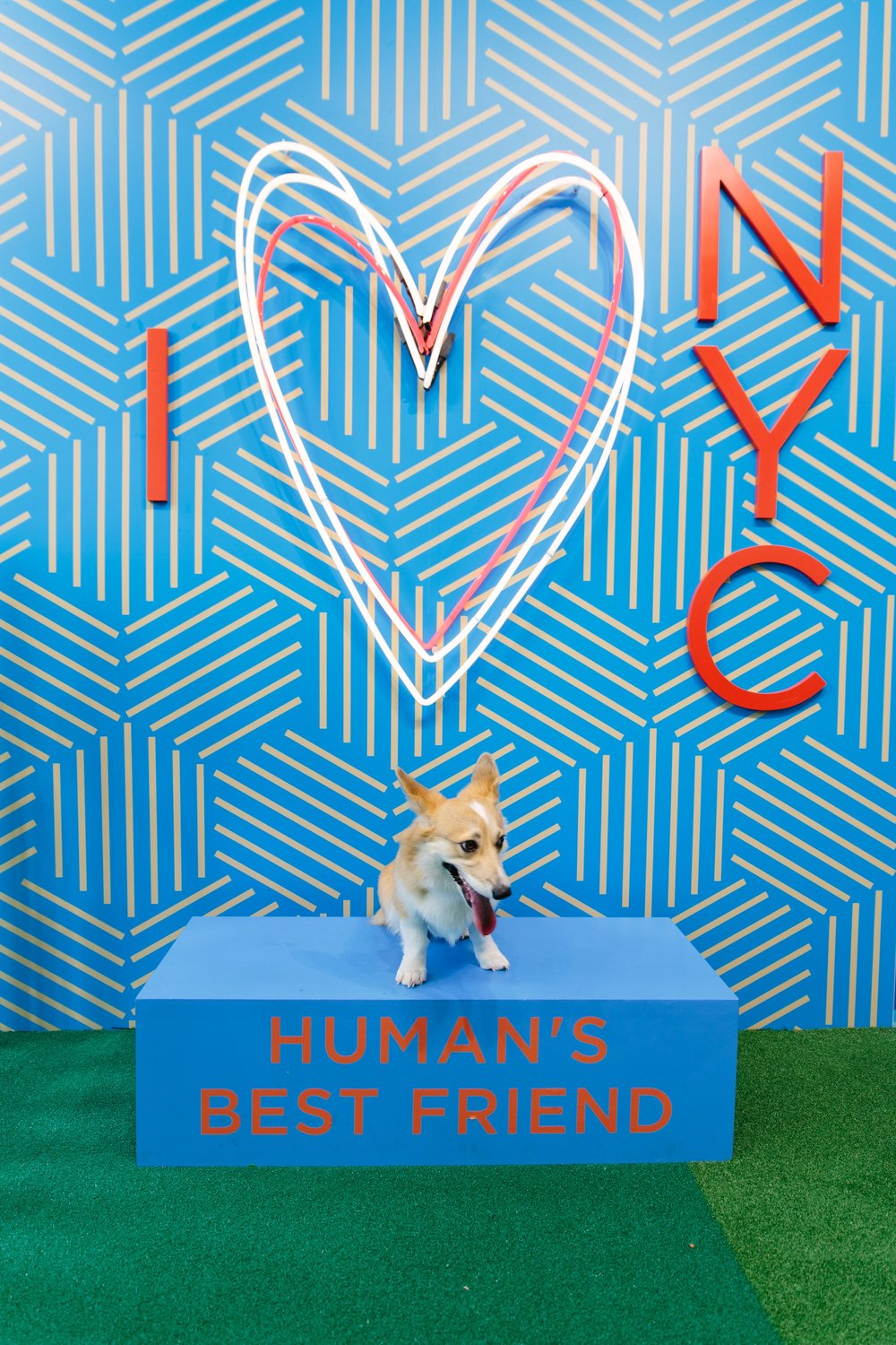 Elizabeth the Corgi visits Humans Best Friend in NYC. Read the full review of Human's Best Friend and see more photos on The Dapple.