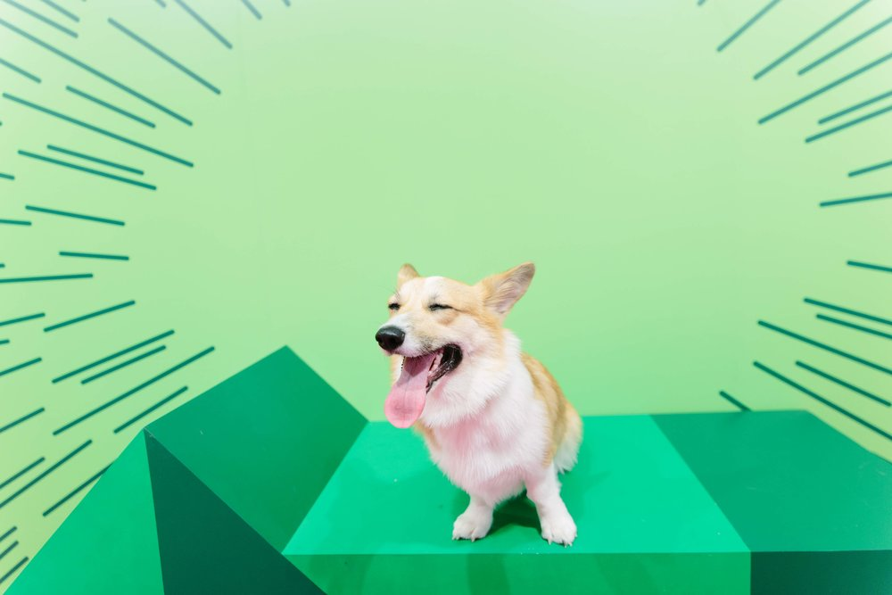 Human's Best Friend Dog Pop-Up